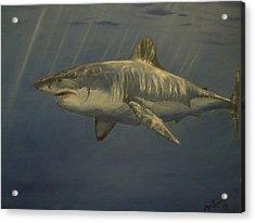 Great White Shark Acrylic Print by Alexandros Tsourakis