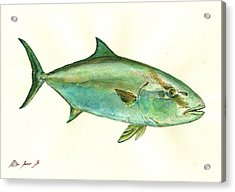 Greater Amberjack Fish Acrylic Print
