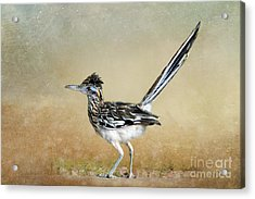 Greater Roadrunner 2 Acrylic Print by Betty LaRue