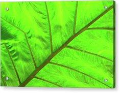 Green Abstract No. 5 Acrylic Print