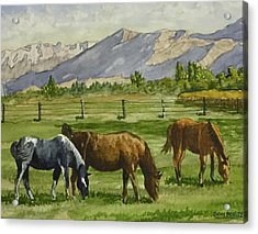 Green Acres Acrylic Print by Don Bosley