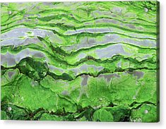 Green Algae Patterns On Exposed Rock At Low Tide, Gros Morne National Park, Ontario, Canada Acrylic Print
