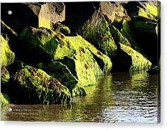 Acrylic Print featuring the photograph Green Algae by Paul SEQUENCE Ferguson             sequence dot net