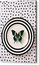 Green And Black Butterfly On Plate Acrylic Print by Garry Gay
