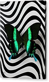Green And Black Butterfly On Wavey Lines Acrylic Print by Garry Gay