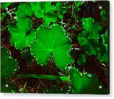 Green And Drops Acrylic Print