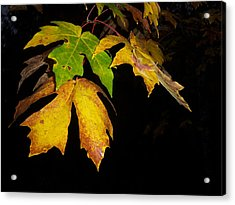 Green And Yellow Acrylic Print by Ken Day