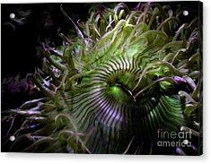Green Anemone Acrylic Print