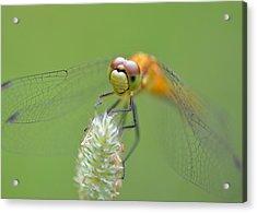 Green Angles Acrylic Print