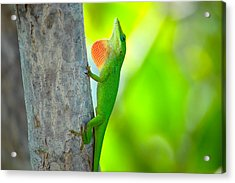 Green Anole Acrylic Print by Rich Leighton