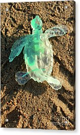 Green Baby Sea Turtle From The Feral Plastic Series By Adam Long Acrylic Print