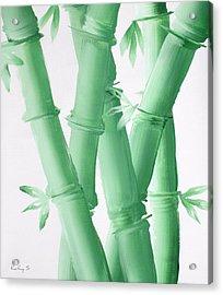 Green  Bamboo Acrylic Print by Kathy Sheeran