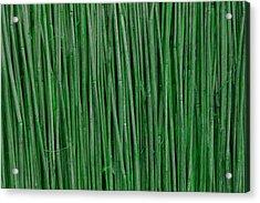 Green Bamboo Acrylic Print by Rajendra Pisavadia