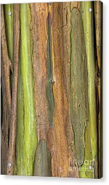 Acrylic Print featuring the photograph Green Bark 3 by Werner Padarin