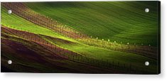 Green Belts Of Fields Acrylic Print by Jenny Rainbow