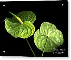 Green Berets Acrylic Print by Christian Slanec