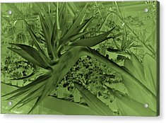 Acrylic Print featuring the photograph Green Bird Of Paradise by Nareeta Martin