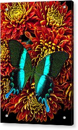 Green Blue Butterfly Acrylic Print by Garry Gay