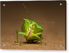Green Bug Acrylic Print