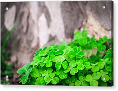 Acrylic Print featuring the photograph Green Clover And Grey Tree by John Williams