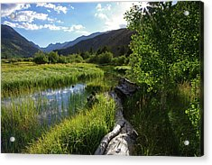Green Creek Meadow Acrylic Print