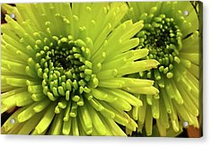 Green Delight Acrylic Print
