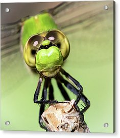 Green Dragonfly Face Acrylic Print by Jim Hughes