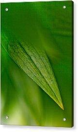 Green Edges Acrylic Print by Az Jackson