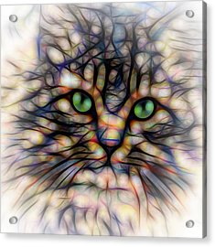 Green Eye Kitty Square Acrylic Print by Terry DeLuco