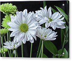 Acrylic Print featuring the photograph Green Eyed Daisy by Bonnie Willis