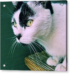 Green Eyed Acrylic Print by JAMART Photography