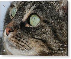 Green Eyes Acrylic Print by Debra Straub