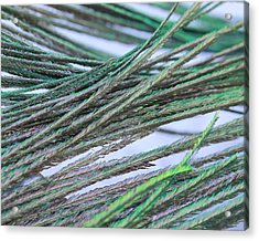 Green Feathers Acrylic Print