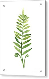 Green Fern Watercolor Art Print Painting Acrylic Print by Joanna Szmerdt