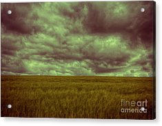 Green Fields 3 Acrylic Print by Douglas Barnard