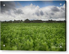 Green Fields 4 Acrylic Print by Douglas Barnard