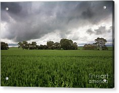 Green Fields 5 Acrylic Print by Douglas Barnard