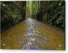 Green Flow Acrylic Print by Jonathan Davison