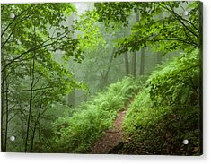 Green Forest Acrylic Print by Evgeni Dinev