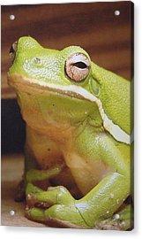 Green Frog Acrylic Print by J R Seymour