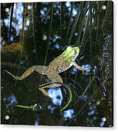 Acrylic Print featuring the photograph Green Frog by Patricia Januszkiewicz