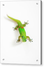 Acrylic Print featuring the photograph Green Gecko by Denise Bird
