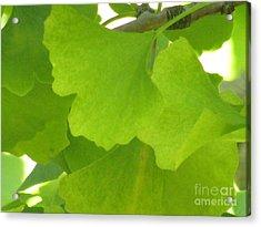 Green Ginkgo Acrylic Print