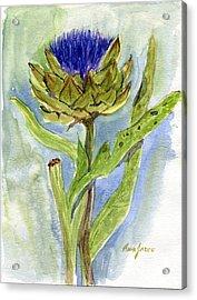 Green Globe Artichoke Bloom Acrylic Print