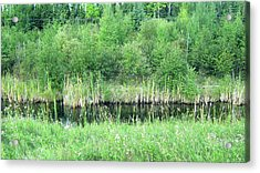 Green Grass Black Water Acrylic Print
