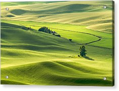 Green Green Grass Of Home Acrylic Print
