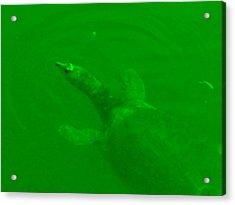 Green Hello Turtle Acrylic Print by Nela n Charlie Nelabooks