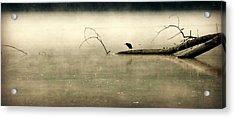 Green Heron In Dawn Mist Acrylic Print by Kathy Barney