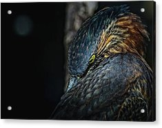 Green Heron . shot It From Times Acrylic Print