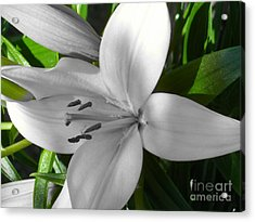 Green Highlighted Lily Acrylic Print